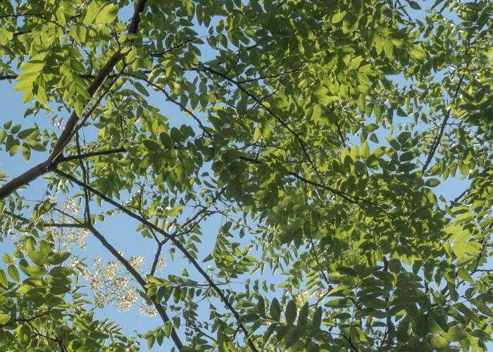 Bomenwacht